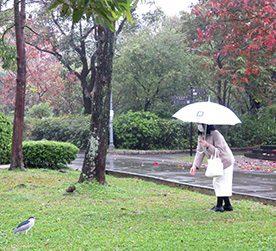 台北-5 大安森林公園・植物園・中山地区散策