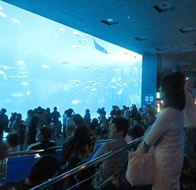 沖縄-1 瀬長島~ちゅら海水族館